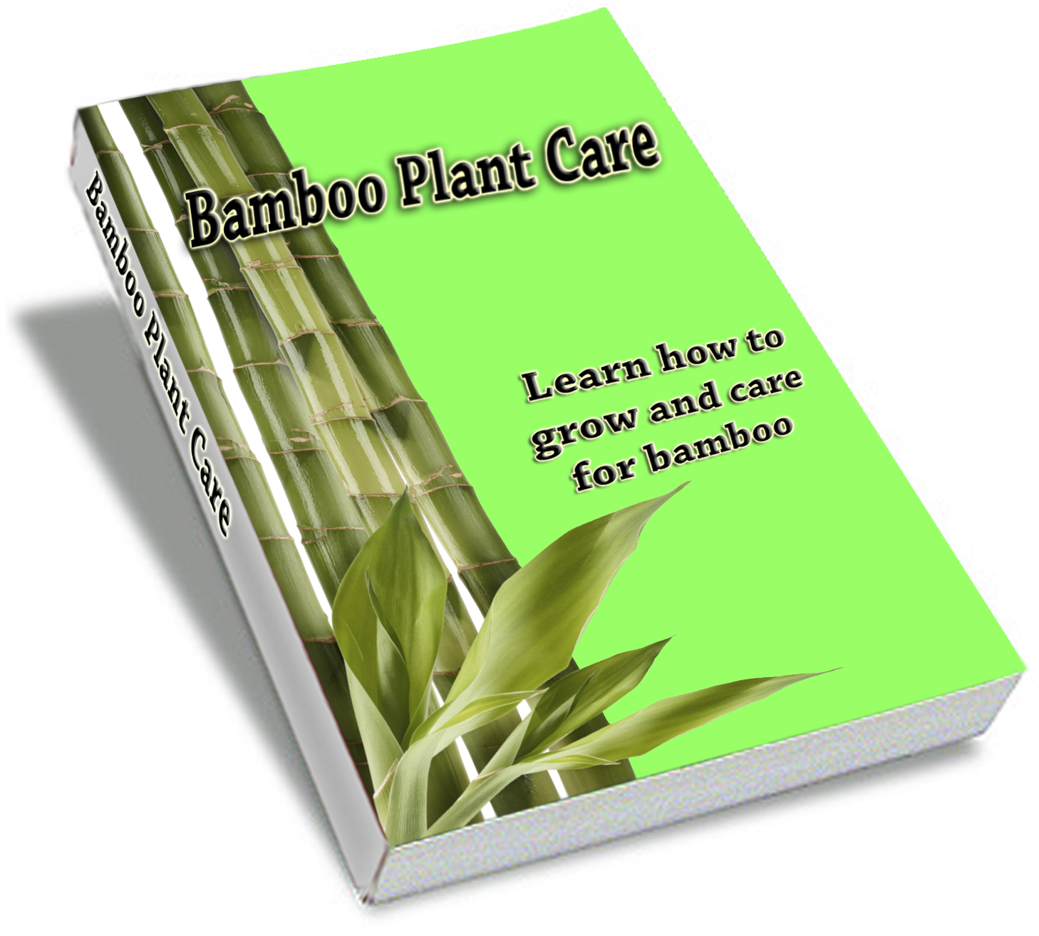 Bamboo Plant Care Guide - Learn How to Grow and Care for Bamboo
